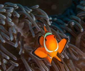 clownfish, cute animals, and sealife image