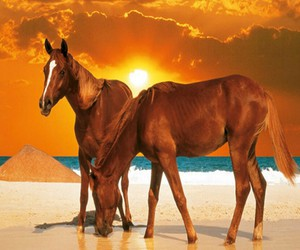 beach, horses, and sand image