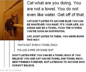 cat, funny, and towel image