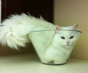 kitty, white, and like a boss image