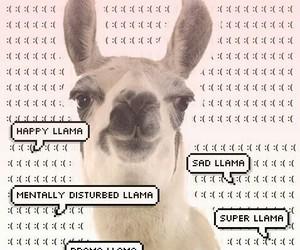 llama image