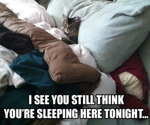 funny, cat, and bed image
