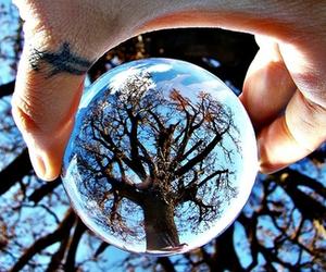 tree, hand, and sky image