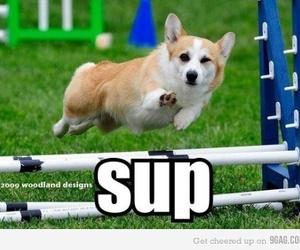 dog, sup, and funny image