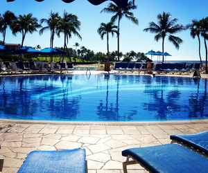blue, palms, and pool image