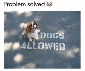 dog, lol, and cute image