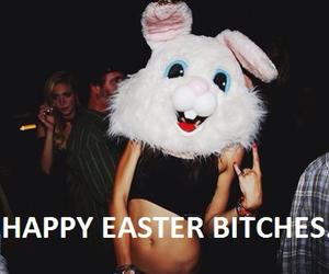 adorable, bunny, and fun image