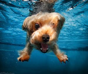 dog, water, and animal image