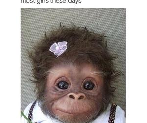monkey, cute, and pretty image