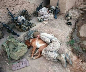 army, dog, and military image