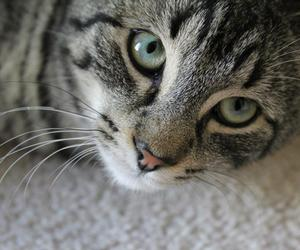 cat, eyes, and photography image