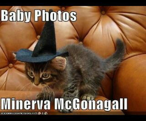 harry potter, hermione, and kitty image