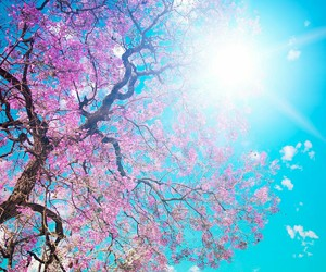 tree, sun, and flowers image