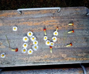 flowers, love, and freedom image