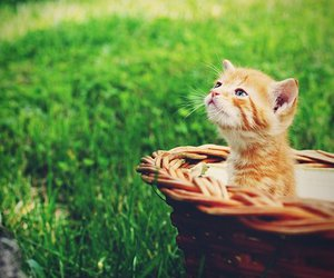 cat, kitten, and spring image