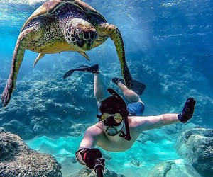 turtle and summer image