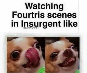 dog, funny, and insurgent image