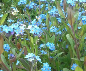 flowers, aesthetic, and blue image