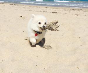 beach, boho, and puppy image