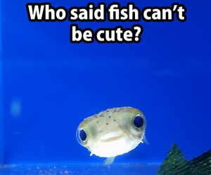fish, cute fish, and cute image