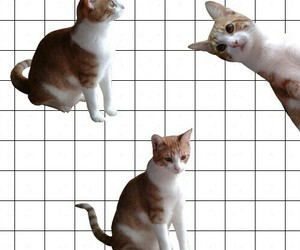 cat, cute, and grid image