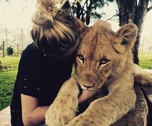 beauty, lion, and pretty image