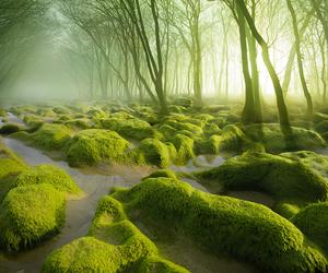 magic, forest, and transilvania image