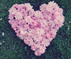 blossom, cherry blossom, and nature image