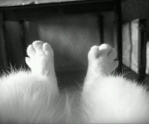 cat, white, and paws image