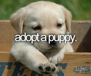 before i die, bucket list, and puppy image