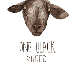 black sheep, illustration, and sheep image