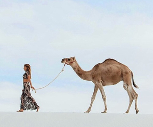 camel, girl, and summer image