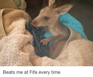 animals, funny pictures, and fifa image