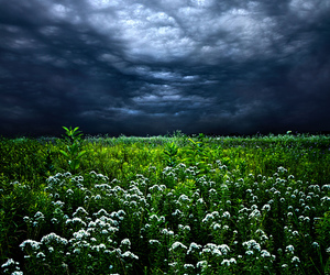 clouds, flowers, and photography image