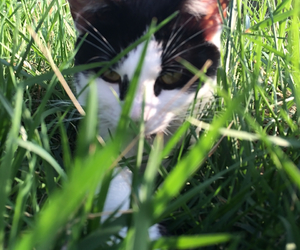 adorable, cat, and grass image
