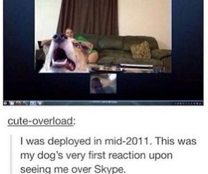 dog, skype, and cute image