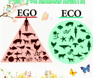 animal, animals, and healthy image