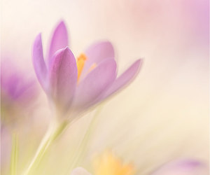 flower, flowers, and pastel image