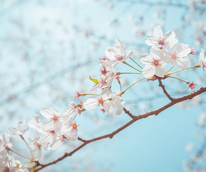 flowers, pastel, and nature image