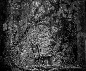 bench, nature, and black and white image