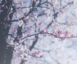blossom, peace, and serenity image