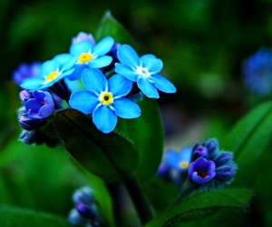 azure, green, and forget-me-nots image