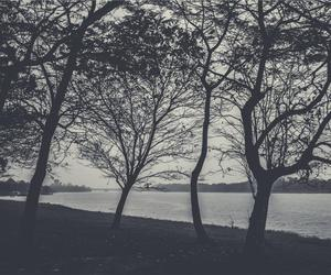 b&w, black and white, and branches image