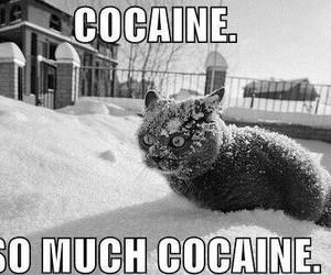 animals, black&white, and cat image