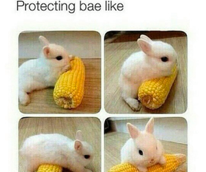 bae, cute, and bunny image