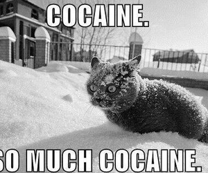 cat, cocaine, and funny image