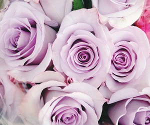 flowers, purple, and romantic image