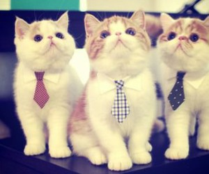 cuties, kitty, and work image