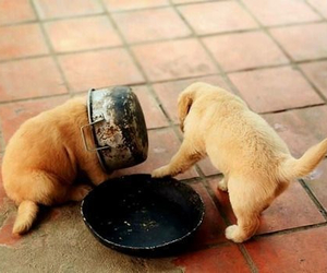 funny, pot, and puppies image