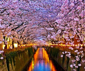 japan, beautiful, and nature image